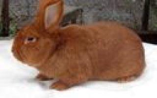Бизнес на кроликах: ферма по разведению кроликов