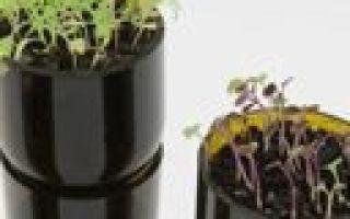 Бизнес идея: цветочные горшки из винных бутылок