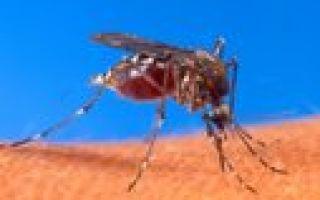Идея бизнеса: продажа ламп от комаров и москитов