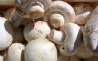Свой бизнес: выращивание и продажа грибов