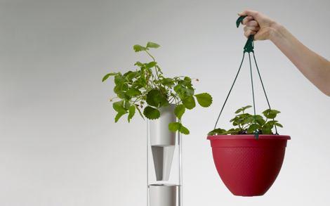 Домашний бизнес — агробизнес