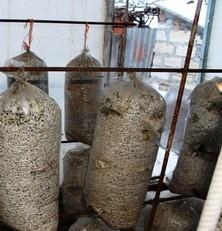 Выращивание грибов в гараже